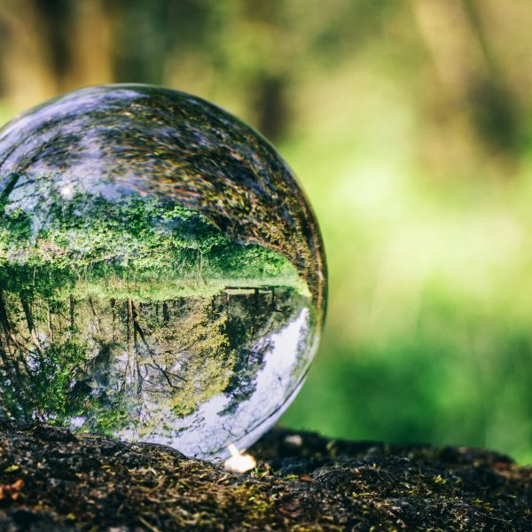 Crystal ball standing on a trunk, reflecting a forest. Environmental conservation. Earth Day.